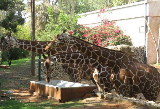 Safari Ramat Gan Zoo